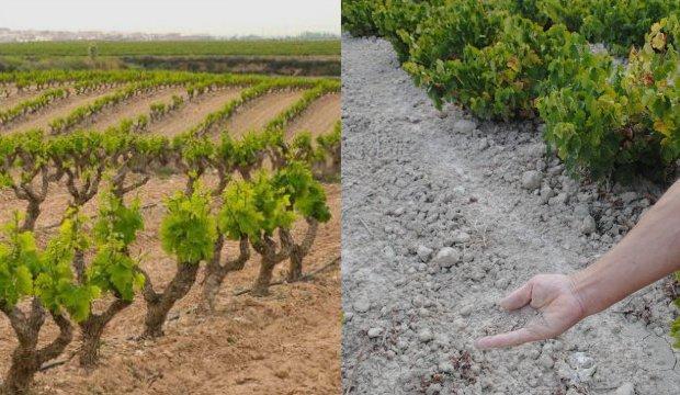 tipos de suelo montilla-moriles