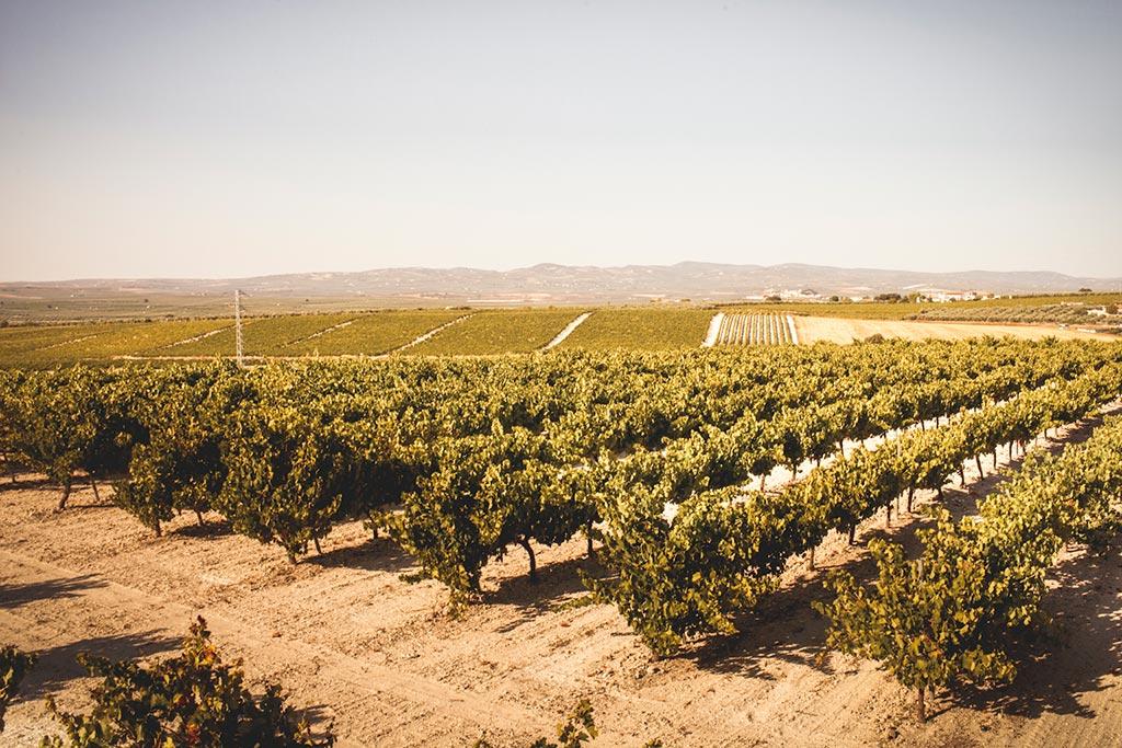 vinos de tinaja lagar bodegas el monte magdalena we love montilla moriles cordoba