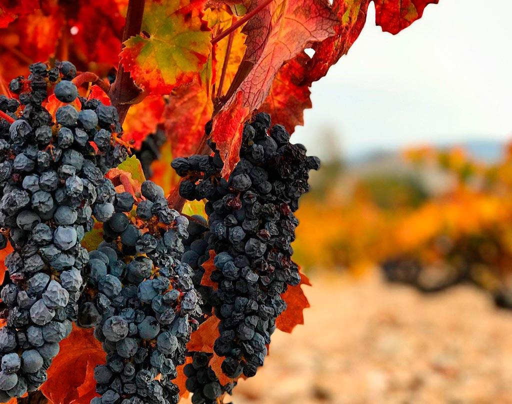 Vinos fortificados Fondillon fortified wines We Love Montilla Moriles Cordoba
