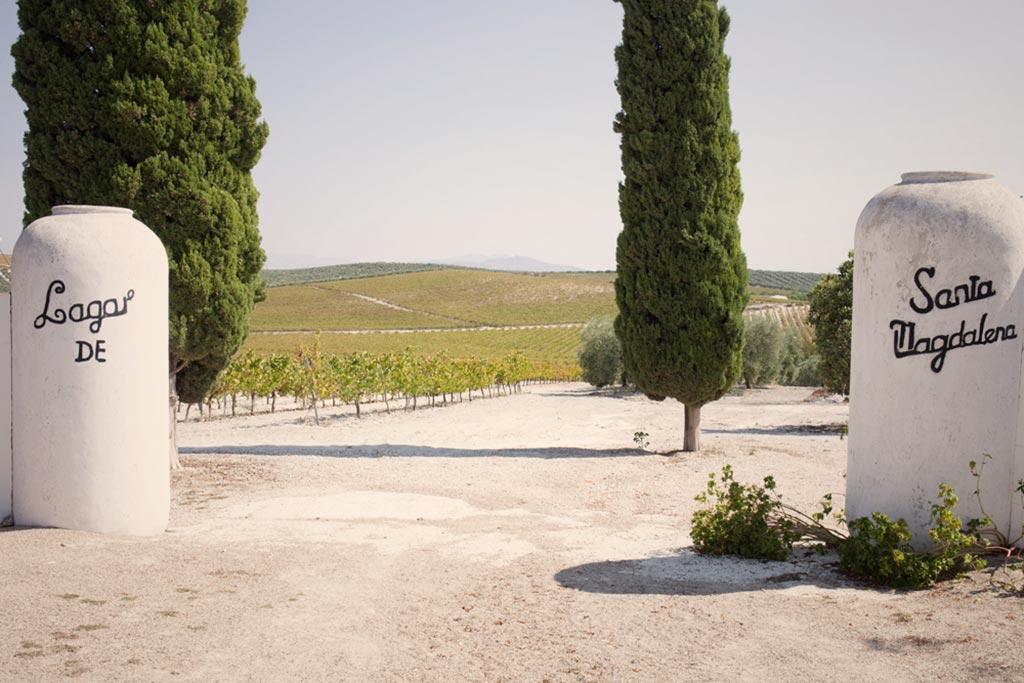 vinos de tinaja lagar santa magdalena we love montilla moriles cordoba