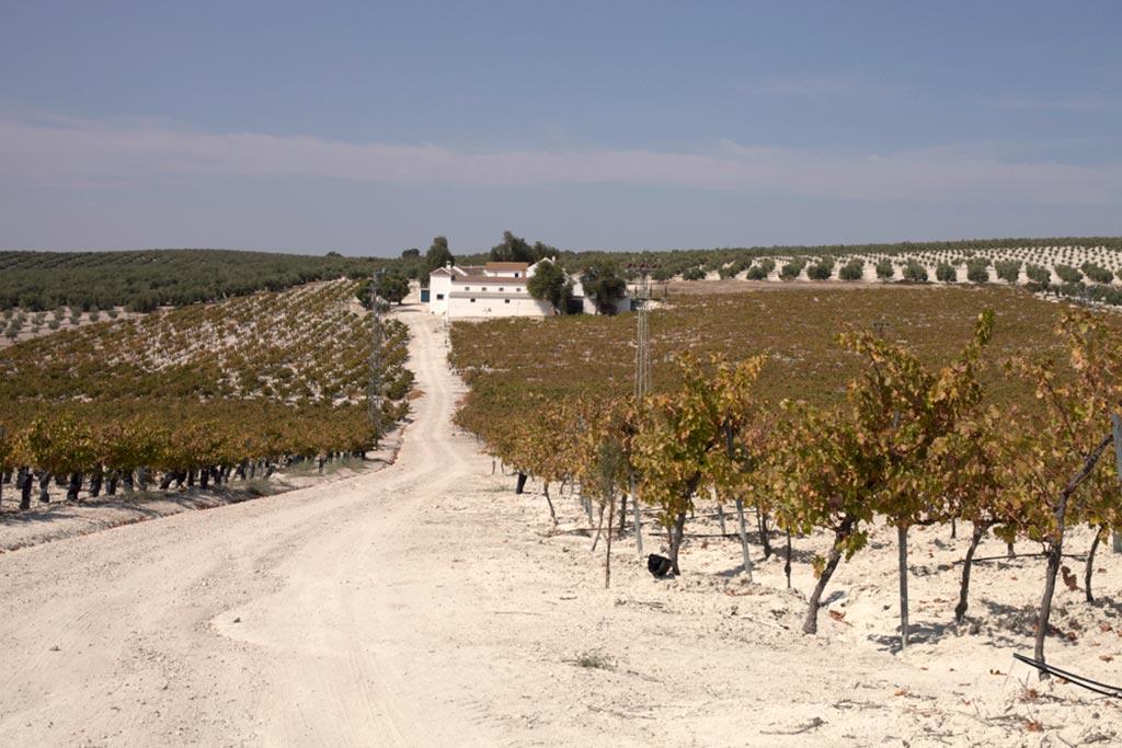 vinos de tinaja lagar los frailes magdalena we love montilla moriles cordoba