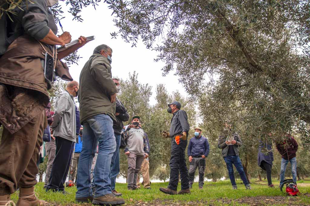 curso olivar we love montilla moriles cordoba