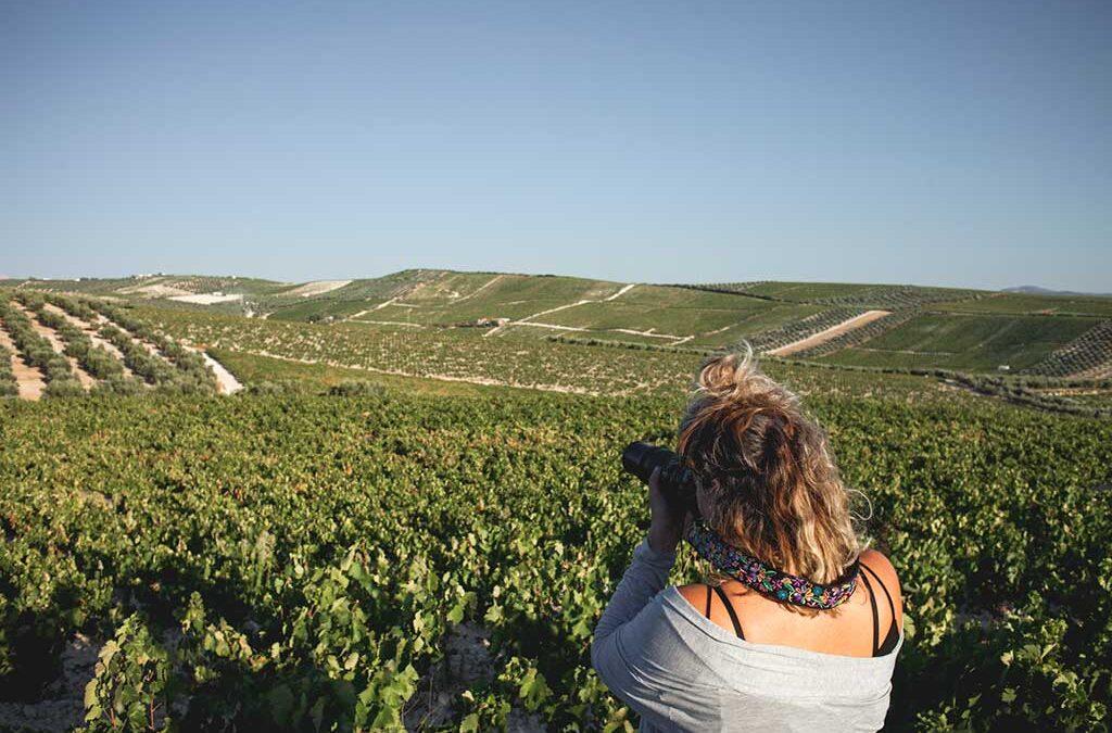 Landscape photo tour of the grape harvest in Montilla Moriles