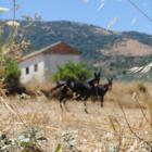 vida rural we love montilla moriles cordoba