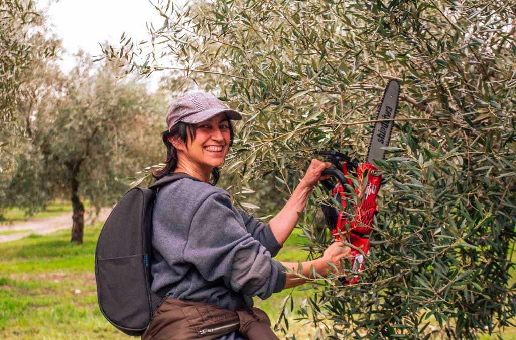 volver-al-olivar we love montilla moriles cordoba