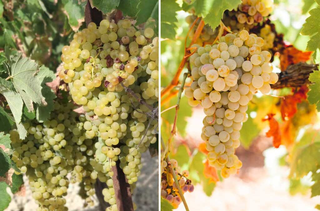 diferenciar-vinos-jerez we love montilla moriles cordoba