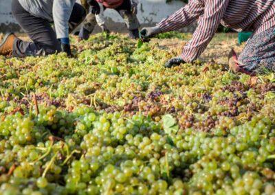 distinguir-vino-px we love montilla moriles cordoba
