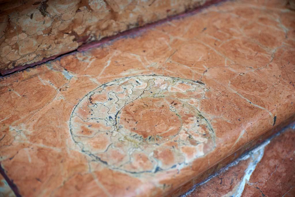 ammonite we love montilla moriles cordoba