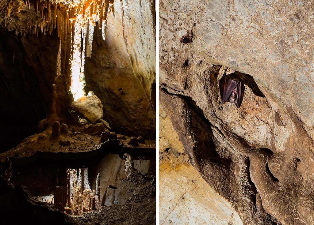cueva murcielagos we love montilla moriles cordoba