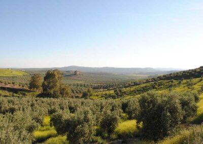 Sierra de Montilla (Córdoba) - we love montilla moriles
